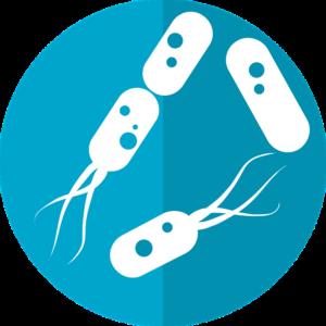 Bactéries & média filtrant